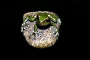 Samurai Frog20130924