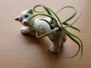 cat potter